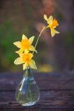 Piękny bukiet daffodils Zdjęcie Royalty Free