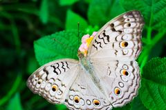 Piękny butterflie Obrazy Royalty Free