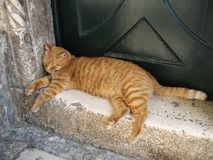 Piękny czerwony kot na kroku Dubrovnik croatia Obrazy Royalty Free