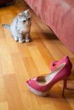 Piękny czerwony kota zerkanie out od bukieta biali astery w wysokiej czarnej wazie za Kobiety ` s moda heeled Obraz Royalty Free
