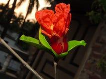 Piękny czerwony kwiat Obrazy Royalty Free