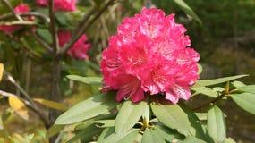 Piękny czerwony kwiat Zdjęcie Royalty Free