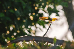 Piękny dragonfly na naturze Fotografia Stock