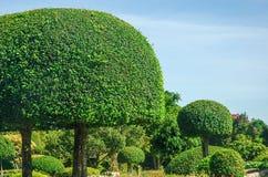 Piękny drzewny projekt w ogródzie Fotografia Royalty Free