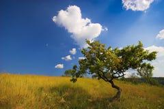 piękny drzewo Zdjęcia Royalty Free