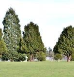 Piękny drzewo Obraz Stock