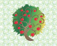 Piękny drzewo Fotografia Royalty Free