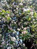 Piękny drzewo Fotografia Stock
