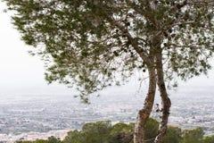 Piękny drzewo krajobraz Zdjęcia Royalty Free