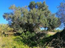 Piękny drzewo w pogodnym ranku fotografia stock