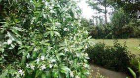 Piękny drzewo z zielonymi polami Obrazy Stock