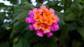 piękny dziki kwiat: & x29; Fotografia Royalty Free