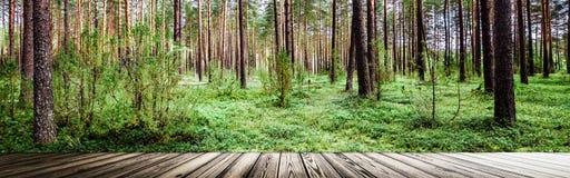 Pi?kny dziki las zdjęcie royalty free