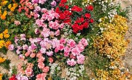 Piękny flowerbed Obrazy Stock