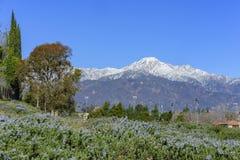 Piękny góry Baldy widok od Rancho Cucamonga Fotografia Royalty Free