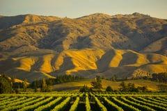 Piękny góry i winogrona jard Fotografia Stock