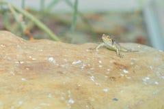Piękny gada lamparta gekonu portret Zdjęcie Royalty Free