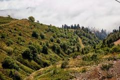 Piękny halny lasu krajobraz Zdjęcia Stock