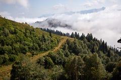 Piękny halny lasu krajobraz Zdjęcie Royalty Free