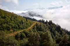 Piękny halny lasu krajobraz Obraz Stock