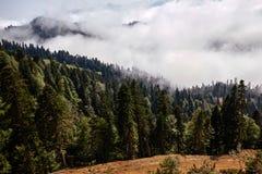 Piękny halny lasu krajobraz Zdjęcia Royalty Free