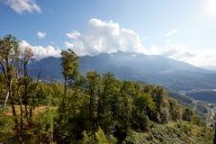 Piękny halny lasu krajobraz Fotografia Royalty Free