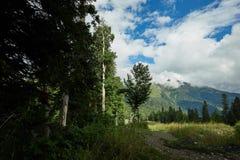 Piękny halny lasu krajobraz Zdjęcie Stock