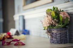 Piękny hiacynt kwitnie w koszu na textural tle Zdjęcie Stock