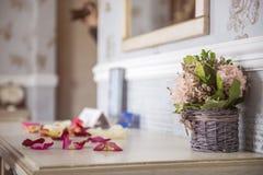 Piękny hiacynt kwitnie w koszu na textural tle Obraz Stock