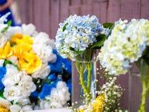 Piękny Hortensia kwiatu przygotowania Obrazy Stock