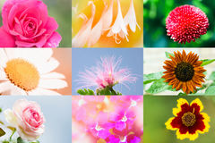 piękny inkasowy kwiat Zdjęcie Royalty Free