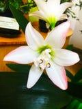 Piękny intensywny storczykowy kwiat zdjęcia stock