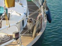 Piękny jacht z Perskim kotem Zdjęcie Royalty Free