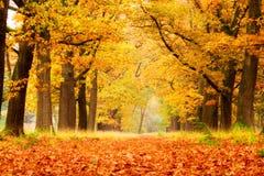 Złoci drewna w jesieni fotografia royalty free