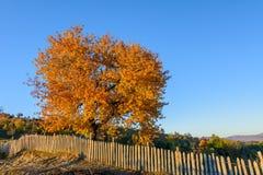 Piękny jesieni drzewo w halnej lasowej jesieni scenie z co Fotografia Royalty Free