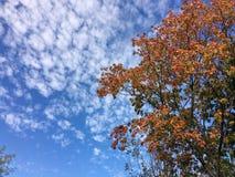 Piękny jesieni ulistnienie przeciw niebu Fotografia Stock