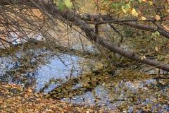 pi?kny jesienny park zdjęcia stock