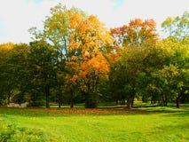 piękny jesienny park Obrazy Royalty Free