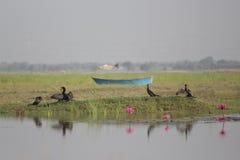 Piękny jezioro i krajobraz Zdjęcie Royalty Free