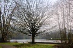 Piękny jezioro w Echternach, Luksemburg Zdjęcie Royalty Free
