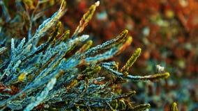 piękny kolor fotografia stock