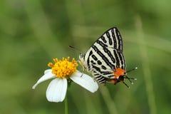 Piękny Kolorowy motyl w naturze Obraz Royalty Free