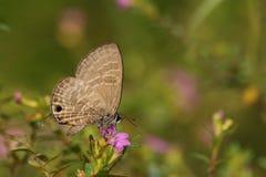 Piękny Kolorowy motyl w naturze Zdjęcie Royalty Free