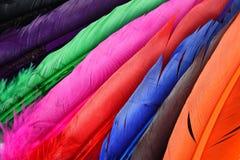 Piękny kolorowy piórko Zdjęcie Stock