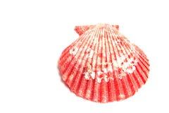Piękny kolorowy seashell Fotografia Stock