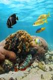 Piękny koral z rafy ryba fotografia royalty free