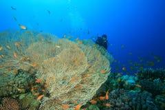 piękny koralowy nurek bada rafowego akwalung Zdjęcie Royalty Free