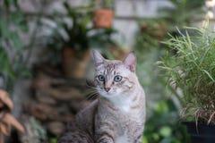 Piękny kot w ogródzie Zdjęcia Royalty Free