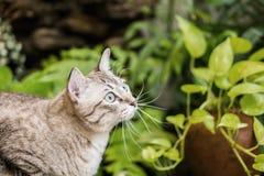 Piękny kot w ogródzie Obrazy Royalty Free
