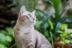Piękny kot w ogródzie Obraz Royalty Free
